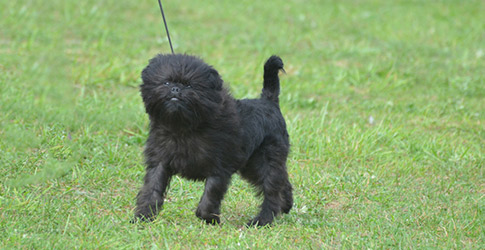 Who's Who of the Small Dog Breeds