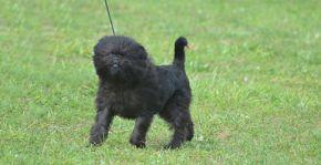 List of Dog Breeds | Petfinder