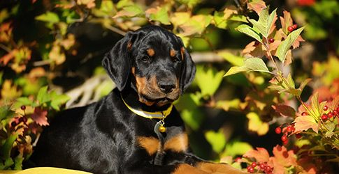 The Smartest Dog Breeds by Alertness and Trainability