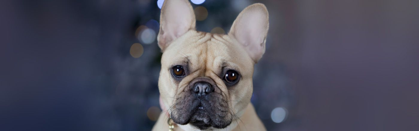What Are The Cutest Dog Breeds Petfinder