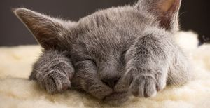 What Are the Cutest Cat Breeds?