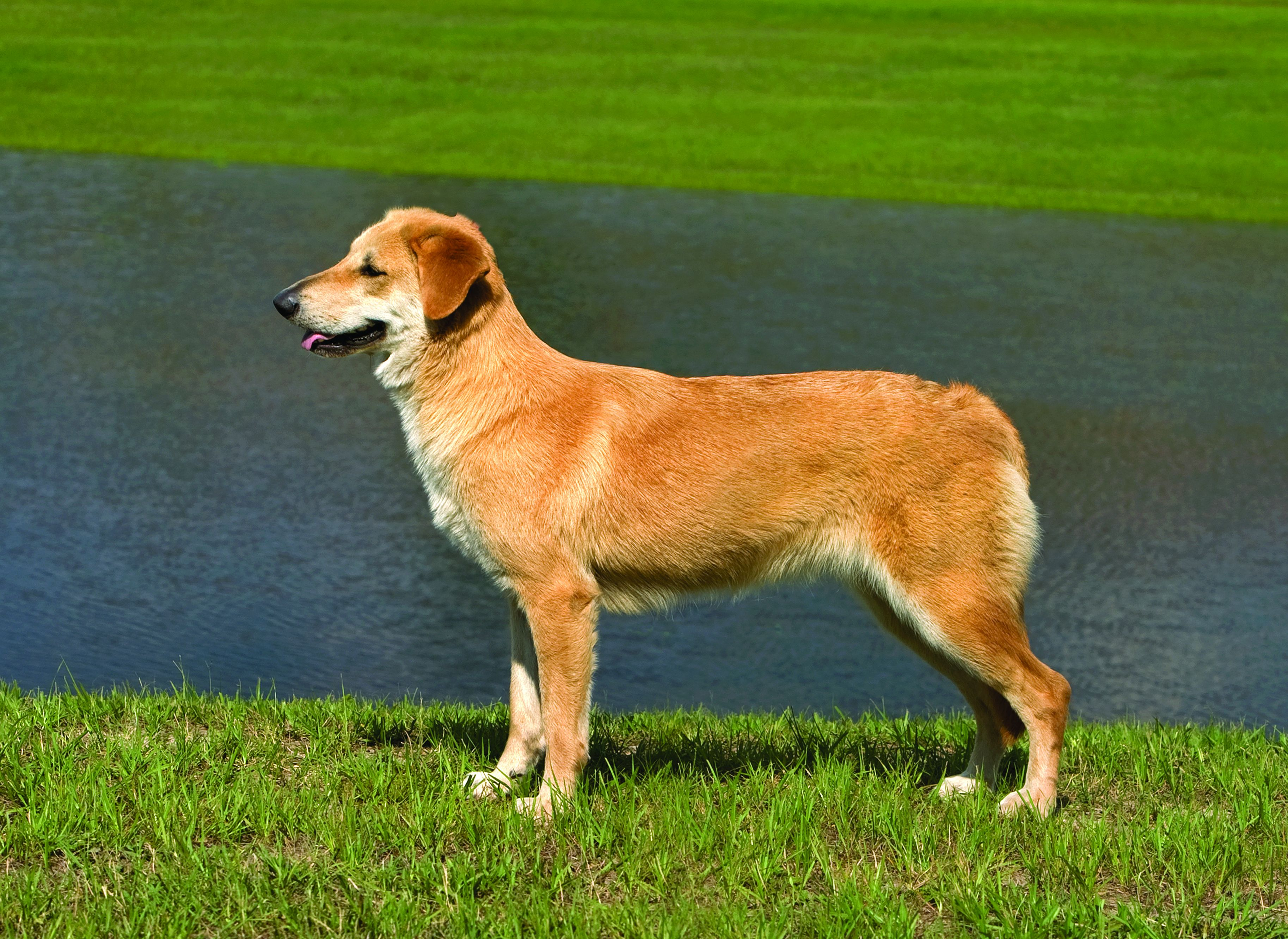 30 Top Medium Dog Breeds For Apartment Friendly Lifestyle ...