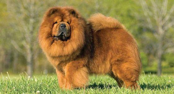 French Bulldog Dog Breed Profile | Petfinder