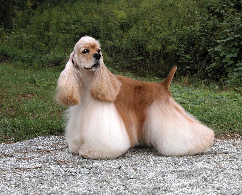 List Of Dog Breeds Petfinder