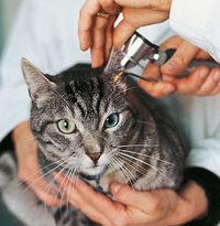 Take your cat to the vet week