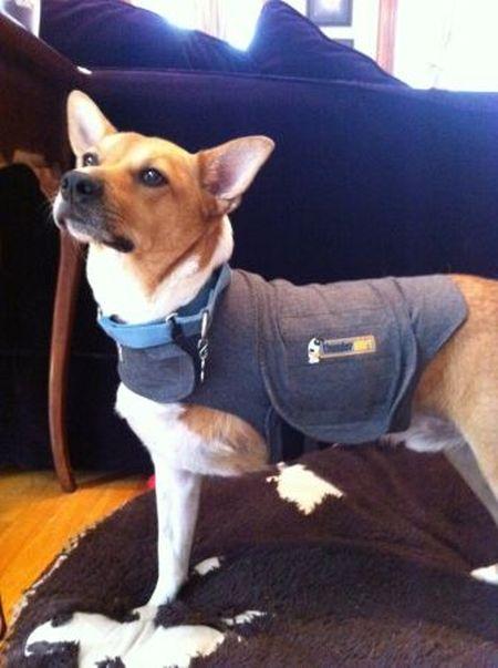 Chewy's Thundershirt