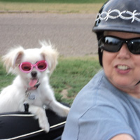 Maltese on motorcycle