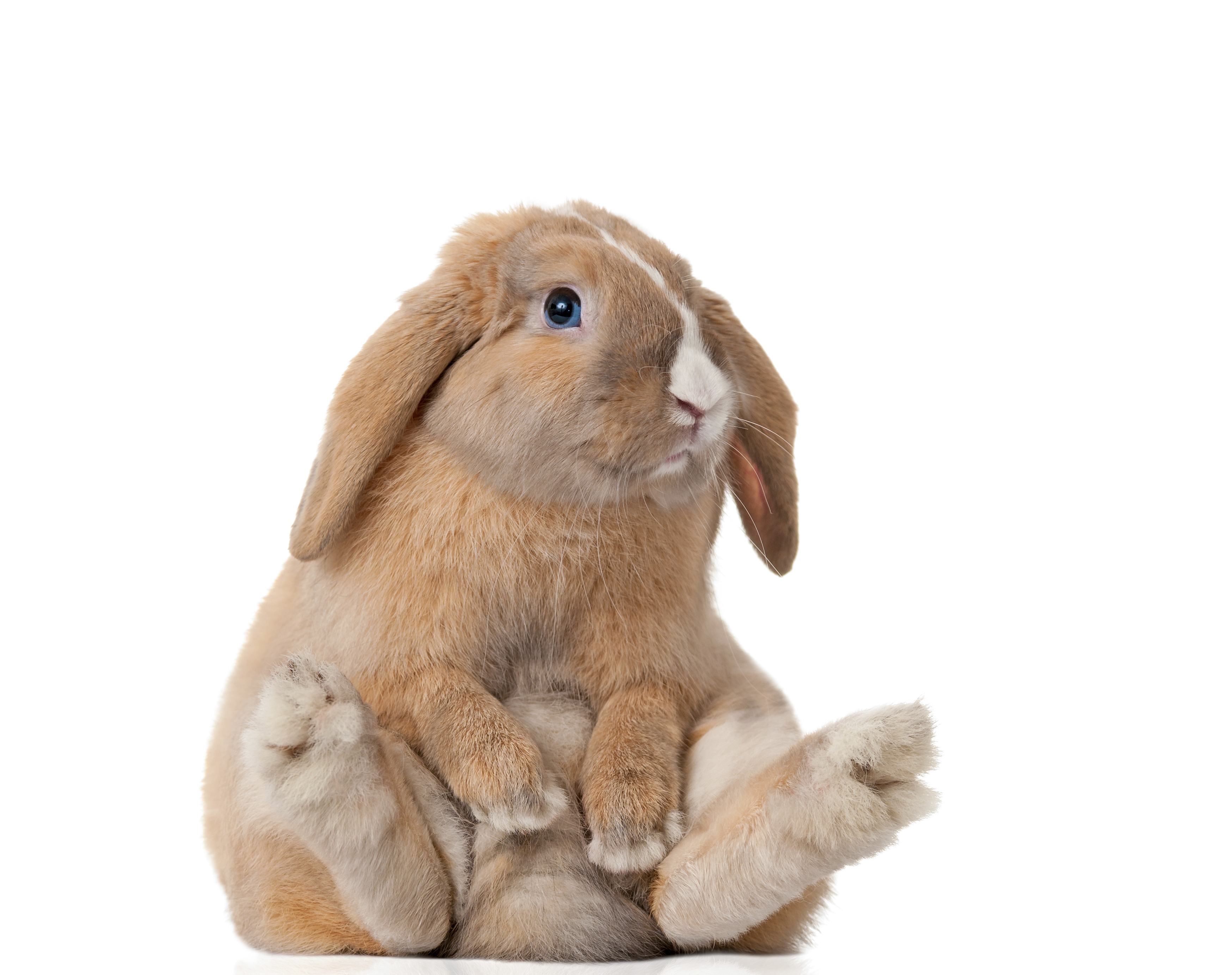 10 Reasons Rescued Rabbits Rule