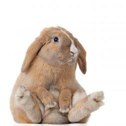 bunny sitting on bottom