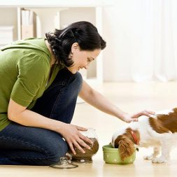 Where to feed your dog