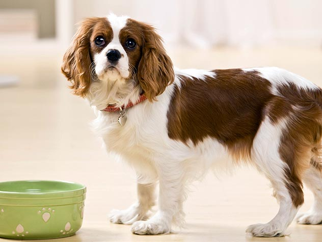 pet food allergies