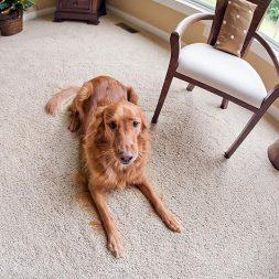 Pet-Friendly Housing Study