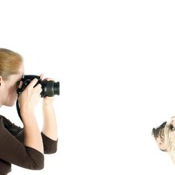 photographer taking pictures of dogs