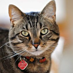 What is Fostering a Cat?