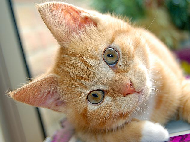 Causes of Conjunctivitis in Cats