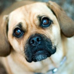 Diagnosis and Treatment of Incontinence in Dogs