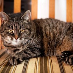 What's the Best Diet for IBD Cats?