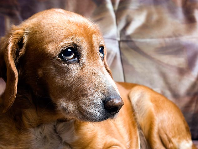 Incontinence in Dogs: Introduction