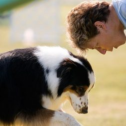 How Are Therapy Dogs Evaluated?