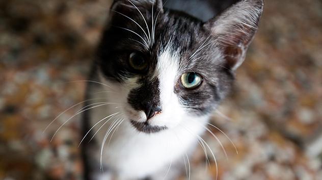 110934005-cat-thinkstock