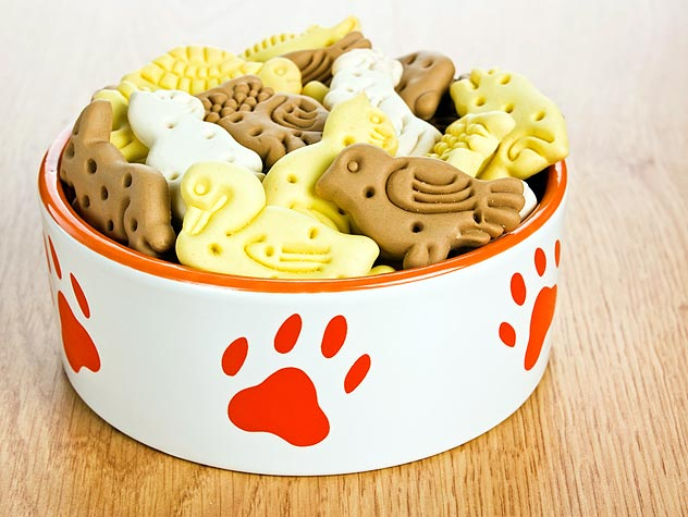 dog treats in a bowl