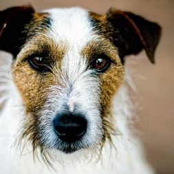 Symptoms and Complications of Distemper in Dogs