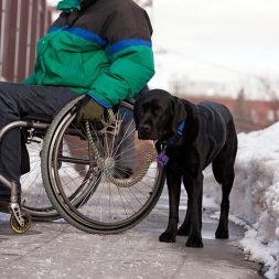 Service Dogs vs. Therapy Dogs: What's the Difference?
