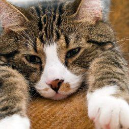 Cat Nail Trims and Caps