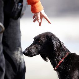 dog trainer training a dog