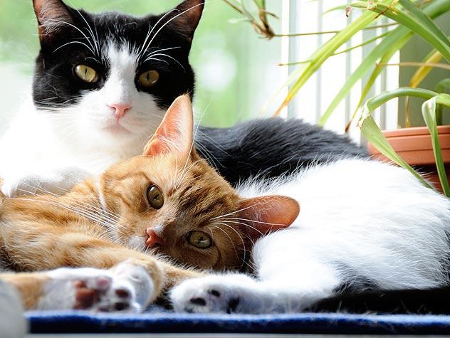 Cat Grooming Petfinder