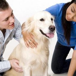 Want to Be a Therapy Dog Team? Start Here
