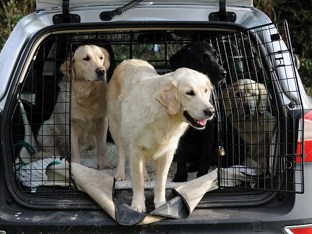 Car Travel with Your Pet