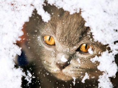 cat looking through snowy window