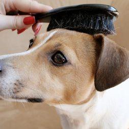 How To Bathe a Dog: More Tips