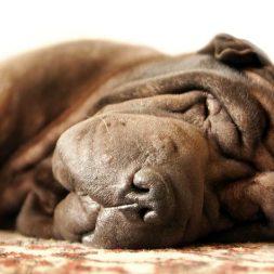 How Arthritis Affects Pets