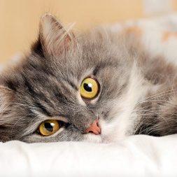 Cat treats calorie counts
