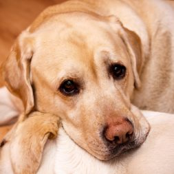 Treating Epilepsy in Dogs