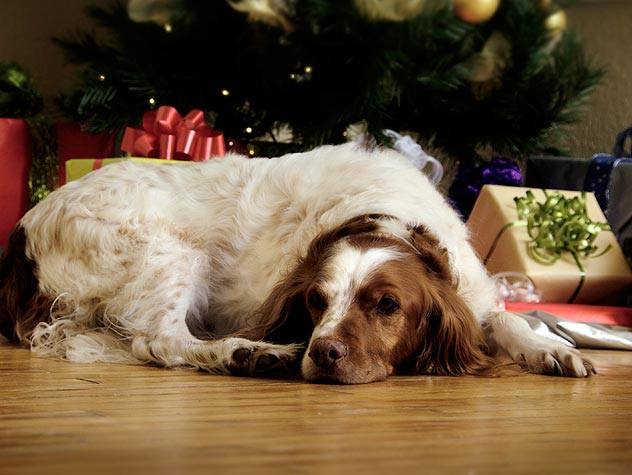 Holiday Pet-Safety Tips and Costs