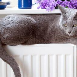 Treatments for Feline Intestinal Lymphoma