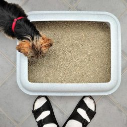 How to Stop Dog Litterbox Snacking