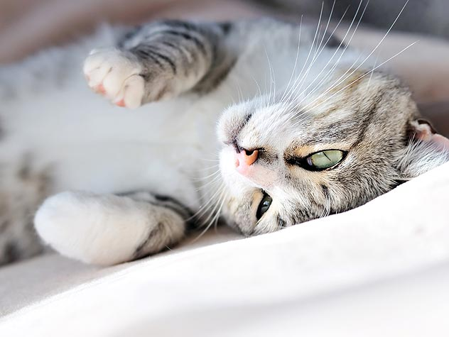 Treatment and Prognosis for Kidney Failure in Cats