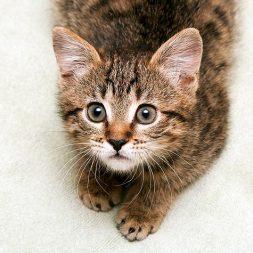 brown kitten