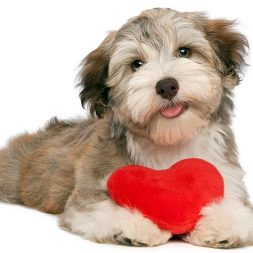 Ten Reasons Your Dog Makes the Best Valentine's Day Date