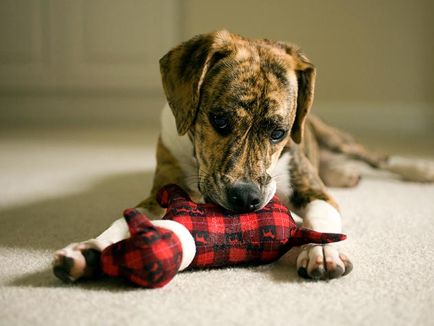 Holiday Foods That Are Hazardous to Pets