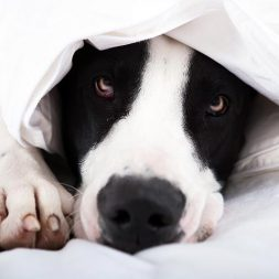Treatments for Constipation in Dogs