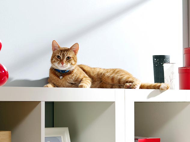 5 Fun Pieces of Litter Box Furniture