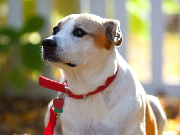How to Get Great Shelter Pet Photos