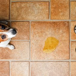 What Dogs Are Prone to Incontinence?
