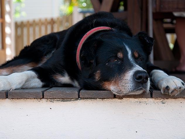 Does My Senior Pet Have Dementia?