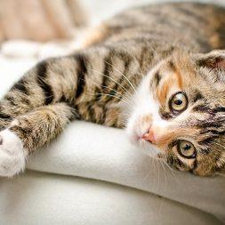 Benefits of Cat Massage
